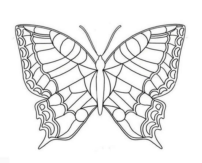butterfly (11) (700x567, 149Kb)