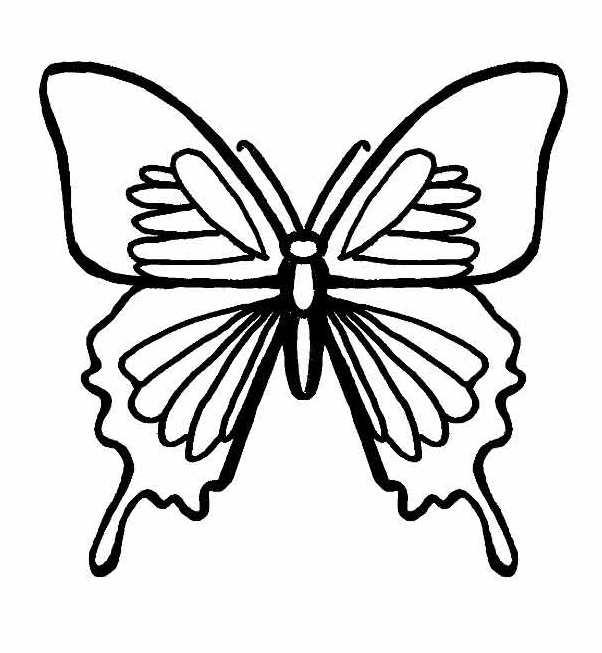 butterfly8 (602x653, 122Kb)