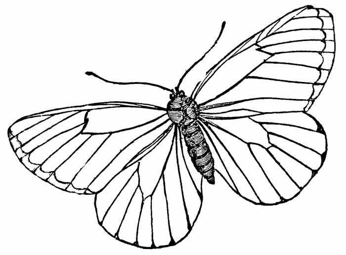 butterfly4 (700x516, 122Kb)
