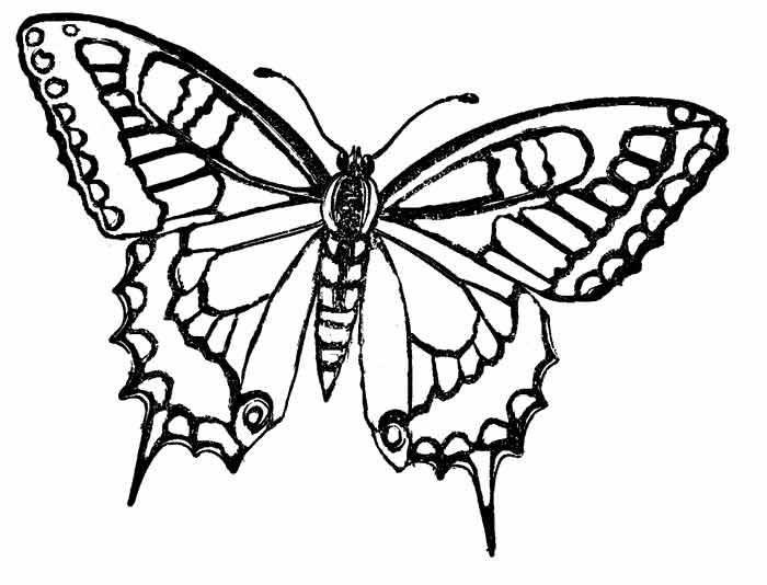 butterfly2 -1 (700x534, 136Kb)