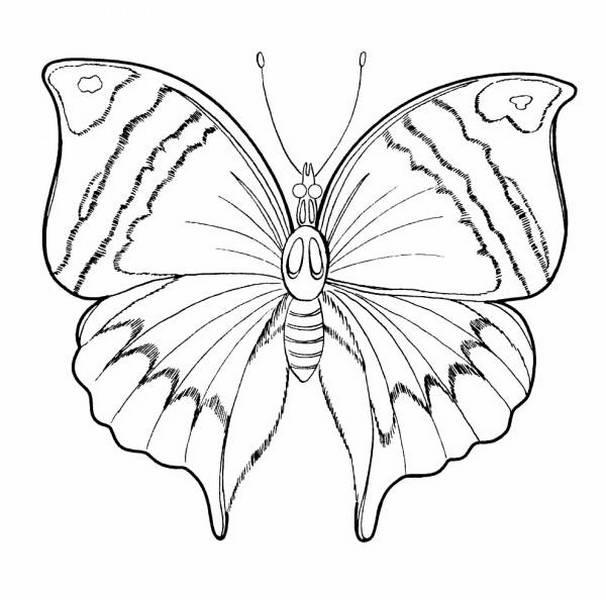 Бабочка - раскраска.  Раскраски бабочки и цветы.