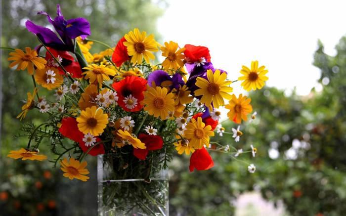 Хочу цветов картинки 1