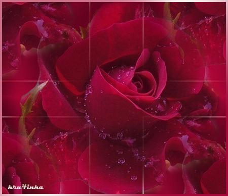 Бордовая-роза (450x388, 289Kb)