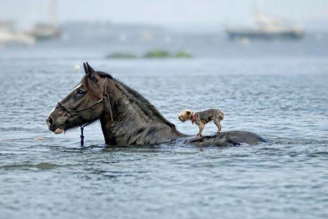 лошадь и пес (640x428, 41Kb)