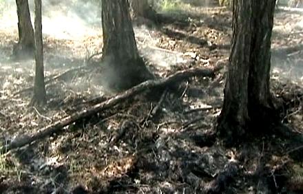 Пожары в Якутии (440x282, 122Kb)