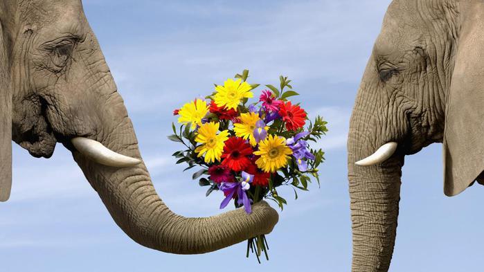 Искусство-дарить-цветы (700x393, 44Kb)