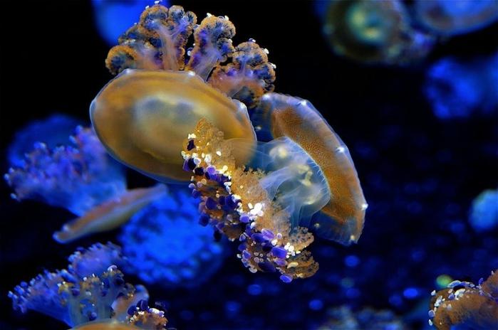 медузы фото 3 (700x464, 190Kb)