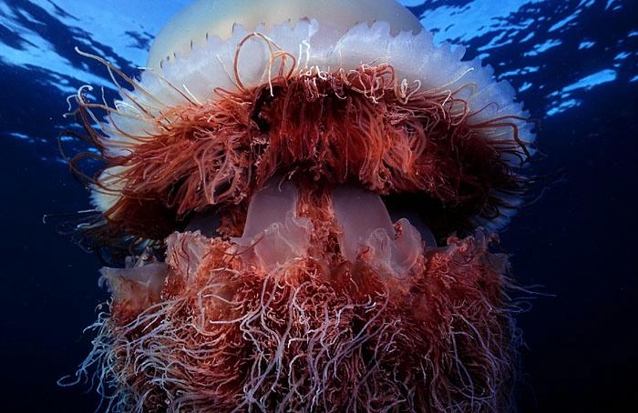 медузы фото 9 (700x454, 233Kb)