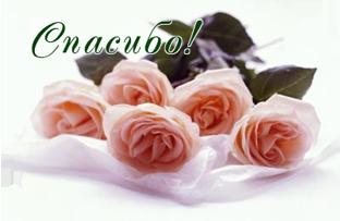 98475386_49741576_cvetuy_roza (312x203, 102Kb)