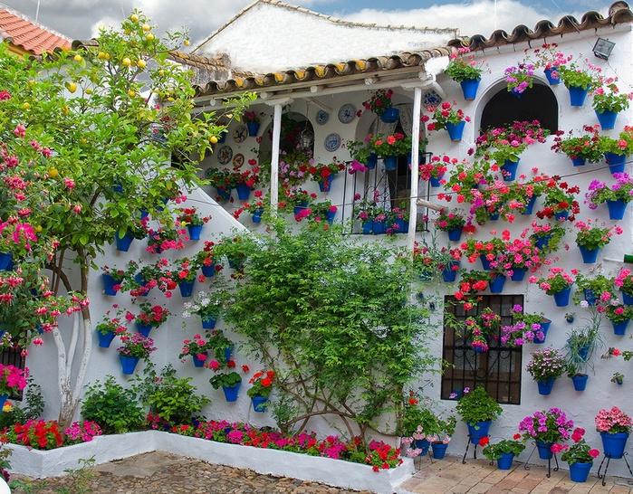 12-красивые цветы на конкурсе патио в Испании.  Город Кордова (700x546, 271Kb)