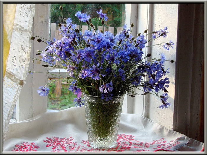 василек мой любимый цветок слушать