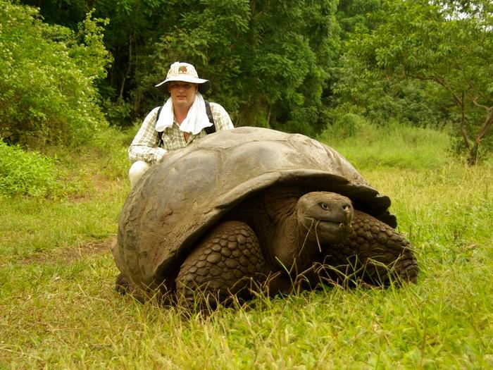 Черепаха Диего спас свой вид от вымирания благодаря неутомимой сексуальности