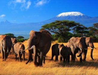 Кения/2741434_74 (326x250, 17Kb)