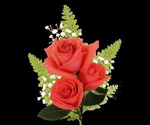 0_8a092_fbaa432_L розы (300x250, 73Kb)
