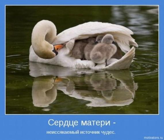 1371638378_1371503014_www.radionetplus.ru-6 (570x488, 120Kb)