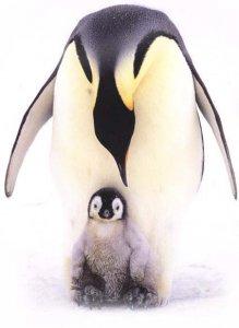1313050875_pingvin (219x300, 10Kb)