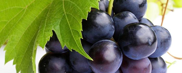 frutta_c1 (700x280, 303Kb)