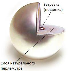 jemchug-stroenie (249x249, 50Kb)