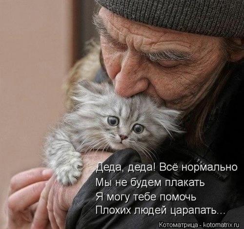 102231325_large_1371814814_novyekotomatr