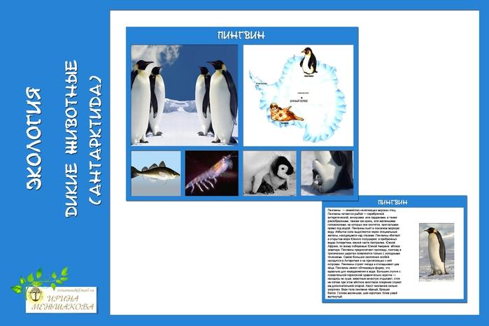 антарктика (700x466, 128Kb)