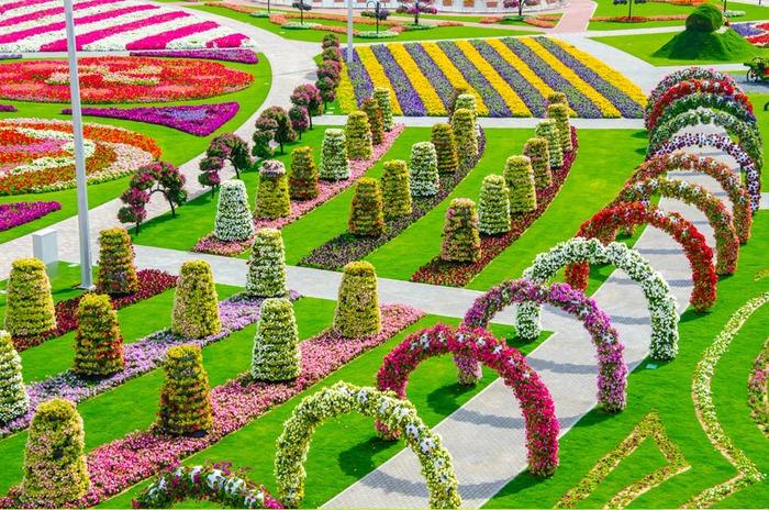 Красивые цветы в саду фото