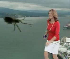 Истерика ведущей из-за паука (295x249, 17Kb)