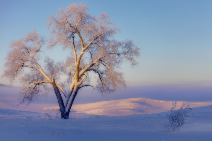 кевин,зима,6 (700x466, 322Kb)