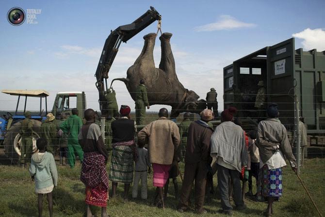 слон фото (670x447, 171Kb)