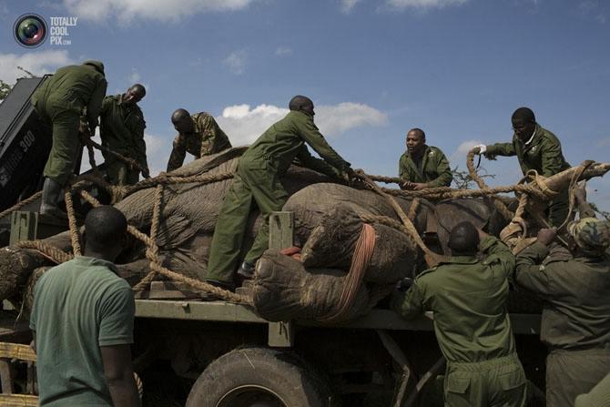 слон фото 2 (670x447, 159Kb)