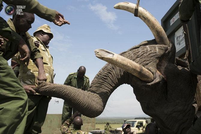 слон фото 4 (670x447, 175Kb)