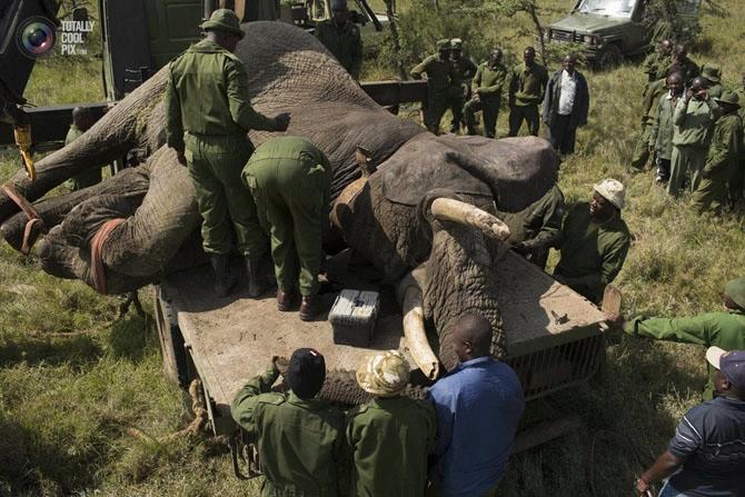 слон фото 6 (670x447, 243Kb)