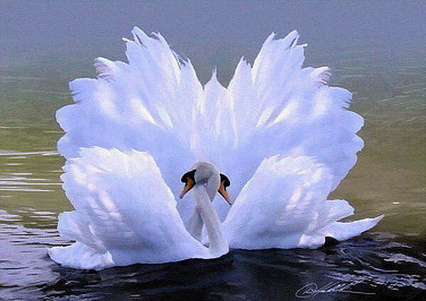 А белый лебедь на пруду.