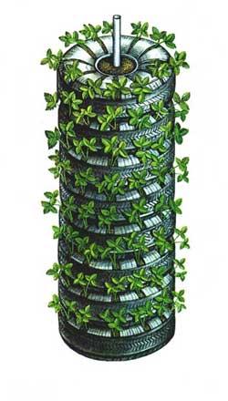 Выращивание клубники в шинах вертикально 24