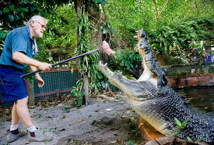 крокодил Кассиус Клей фото 6 (700x477, 391Kb)