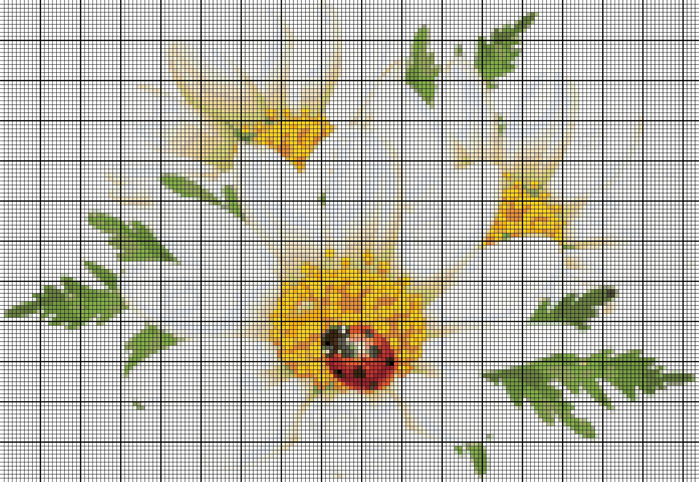 Картинки цветы ромашки нарисованные 1