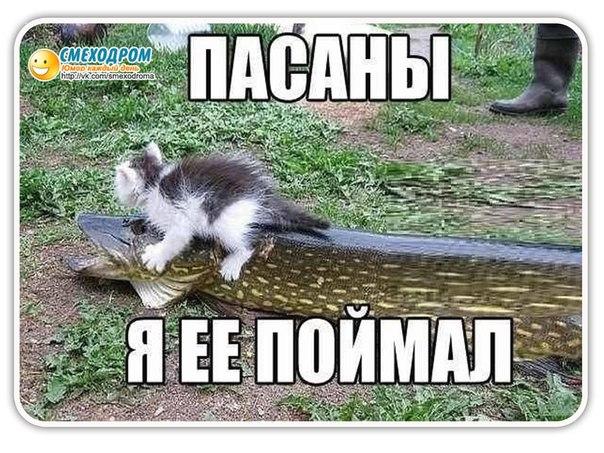 http://img1.liveinternet.ru/images/attach/c/8/102/371/102371143_large_Wcp8TKvlybI.jpg