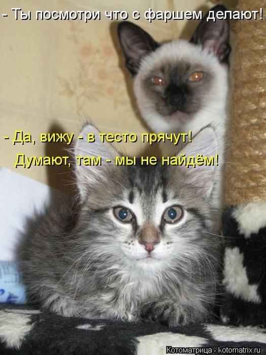 kotomatritsa_Lr (524x700, 247Kb)