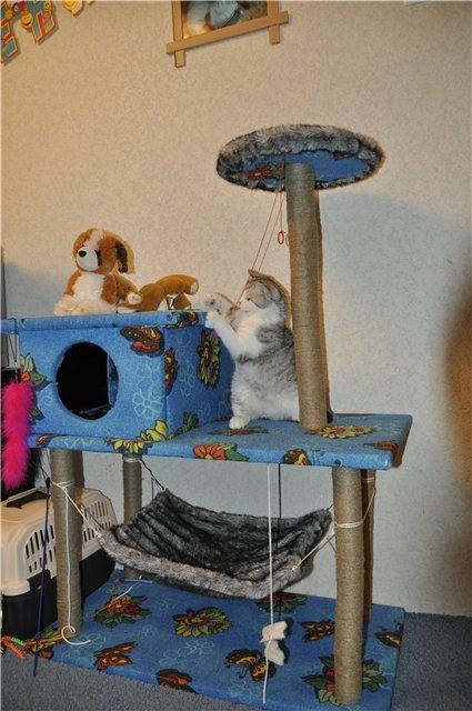 cat_house8 (425x640, 213Kb)