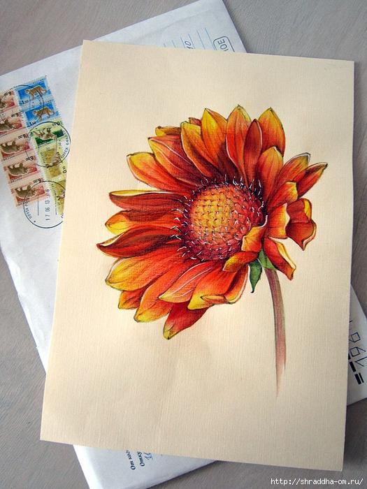 Цветок от Тани (1) (525x700, 325Kb)