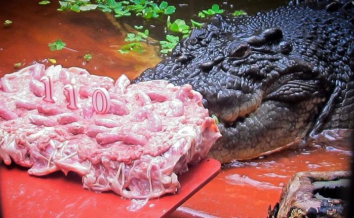 самый большой крокодил в мире Кассиус Клей фото 1 (700x430, 413Kb)