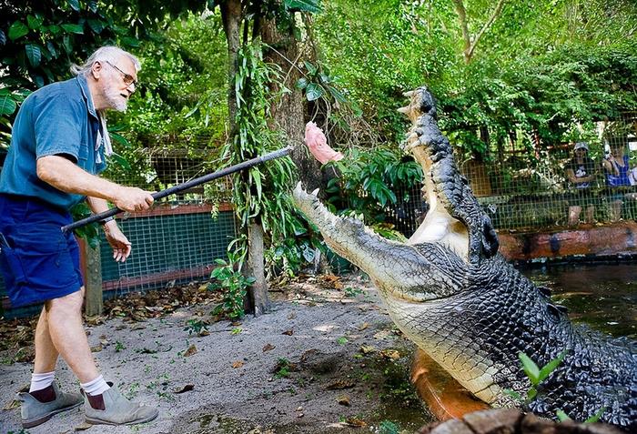 самый большой крокодил в мире Кассиус Клей фото 7 (700x477, 569Kb)