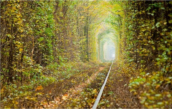 Tunnel Of Love, Kleven, Ukraine_ 3 (585x372, 363Kb)