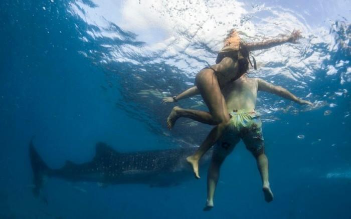 кормление китовых акул фото 1 (700x437, 104Kb)