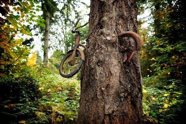 велосипед в дереве на острове вашон фото 3 (604x403, 400Kb)