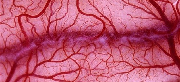 1366708799_blood-vessels-1 (633x290, 54Kb)