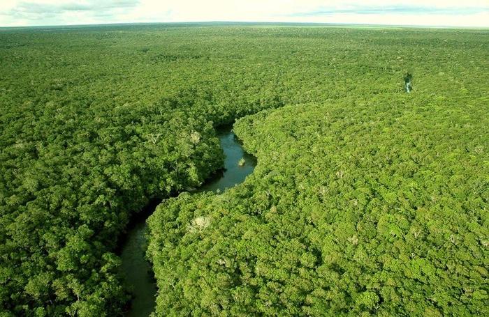 Леса Амазонии (700x455, 462Kb)