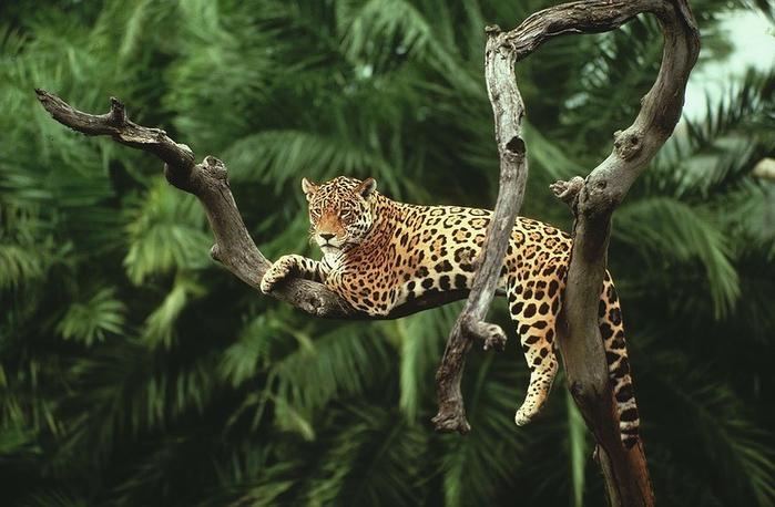 Леса Амазонии7 (700x458, 332Kb)