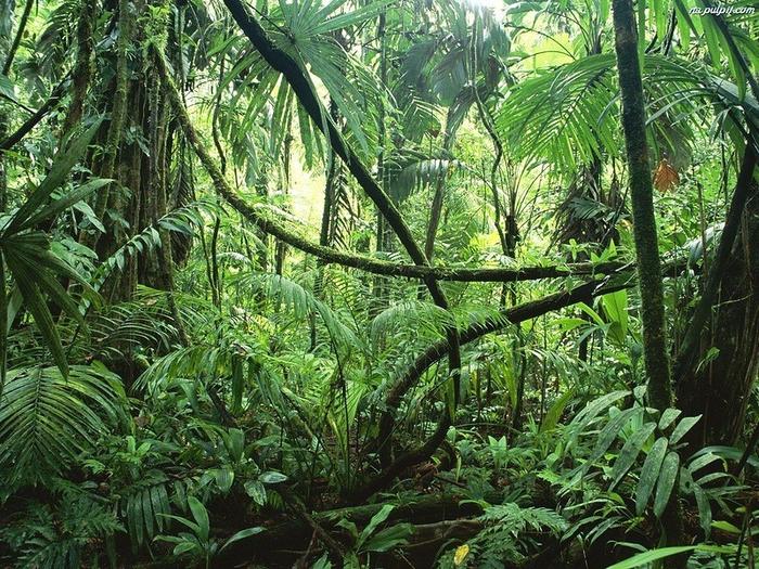 Леса Амазонии12 (700x525, 584Kb)