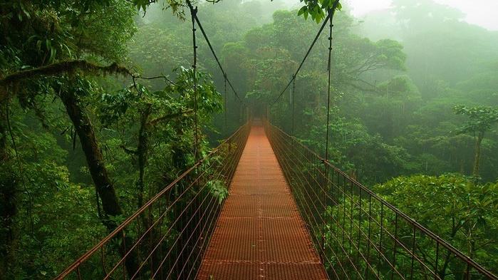 Леса Амазонии14 (700x393, 377Kb)