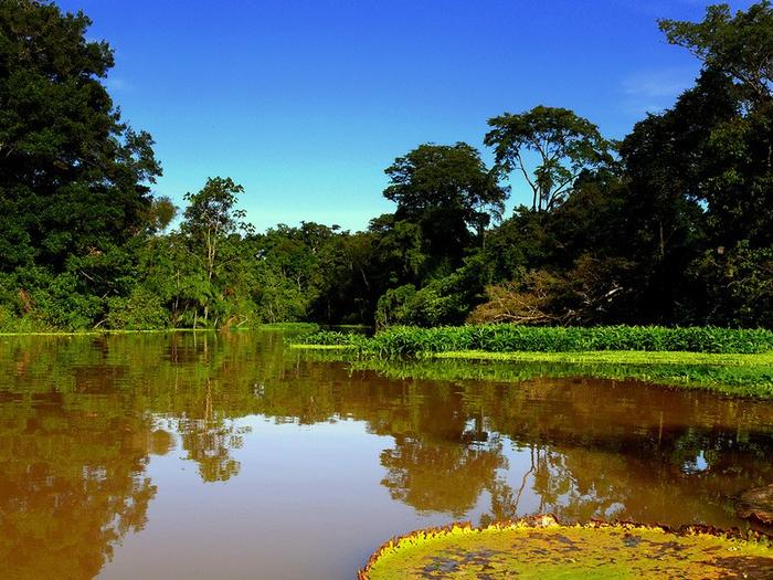 Леса Амазонии17 (700x525, 524Kb)